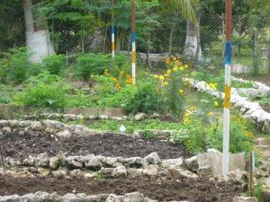 Organic Farm in Havana